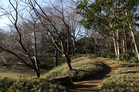 20100116_sakura_castle-24.jpg