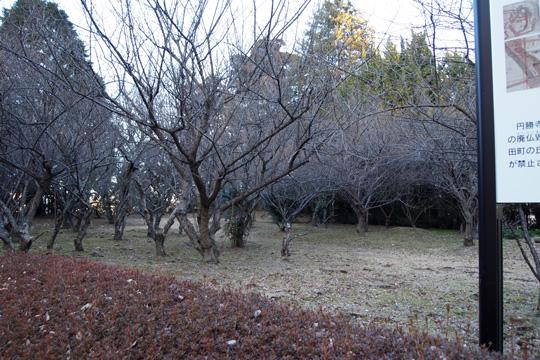 20100116_sakura_castle-53.jpg