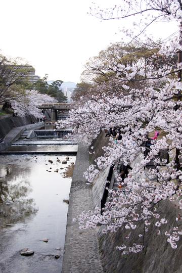 20100404_shukugawa_park-01.jpg