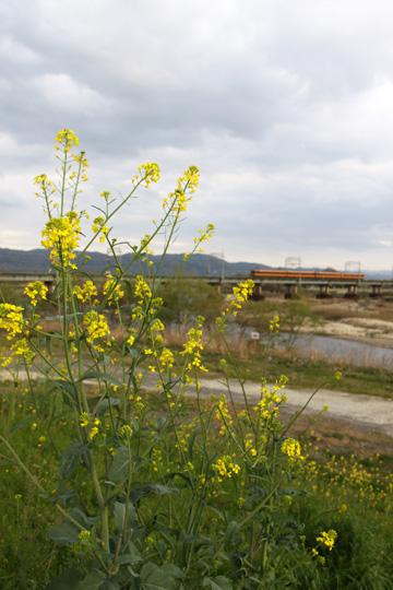 20100410_kizugawa_bridge-02.jpg
