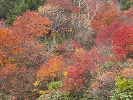 磐梯の紅葉