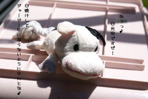 DSC08912-1.jpg