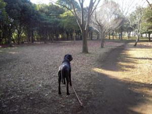 散歩の行き先