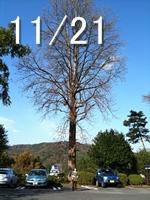 20091121-04.jpg