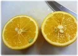 レモンを切るとこんな感じ♪