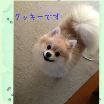 fc2blog_2013112619185662c.jpg