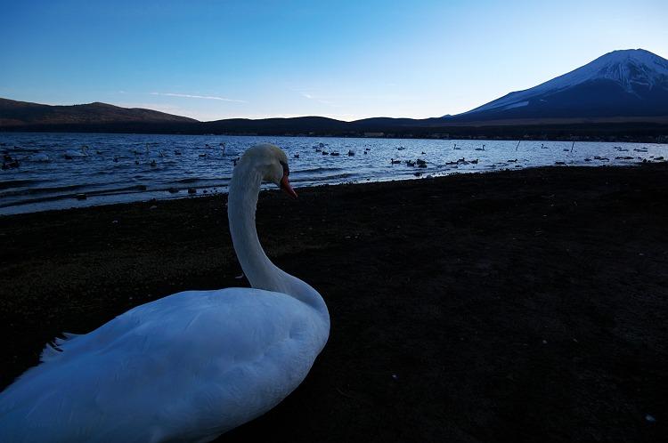 翼を休めて 3 ~山中湖にて~