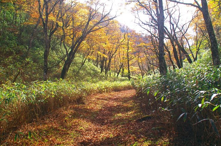 安倍峠の秋 2