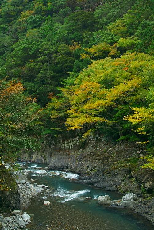 明神峡の紅葉はこれから