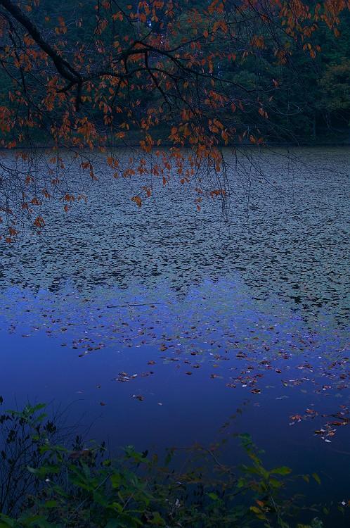 古池の夕暮れ