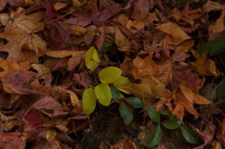 森林公園の紅葉 1