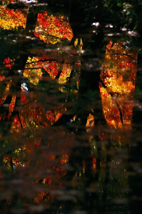 森林公園の紅葉 3