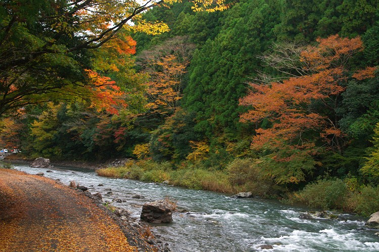 川根の秋 1