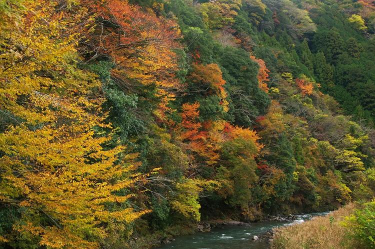 川根の秋 3