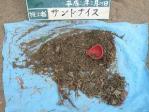 砂場のごみ 小枝、遊具等