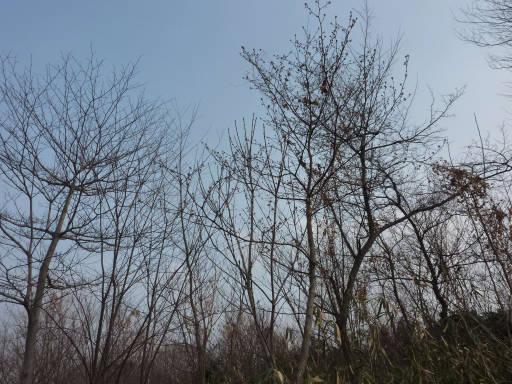20110206・空1・自然観察