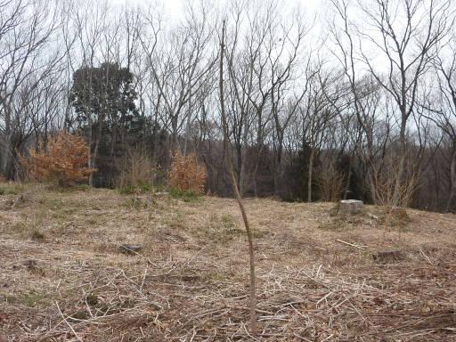 20100220・自然観察会13・桐の木