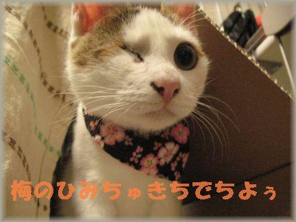 やはり、子猫時代は…ヾ(・ω・)ノ