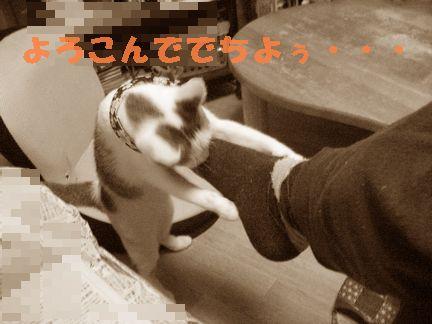 足の匂いを嗅ぎたがる梅子(;゜д゜)