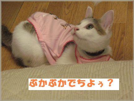 最近、梅子ばっかりでスンマセ?ン(^-^;)
