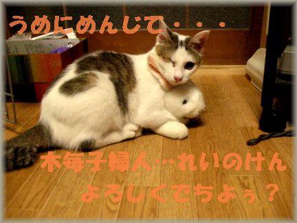 梅子って結構、鋭い目するんだよねヾ(・ω・`)ノ