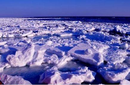 シベリアのアムール川から10000kmもの旅をして、毎年1月下旬頃知床沖にやってくる流氷